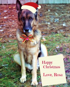christmas-from-rosa